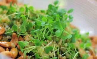 quinoa-salad-7740528