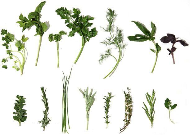 herbs_main_image-9138437