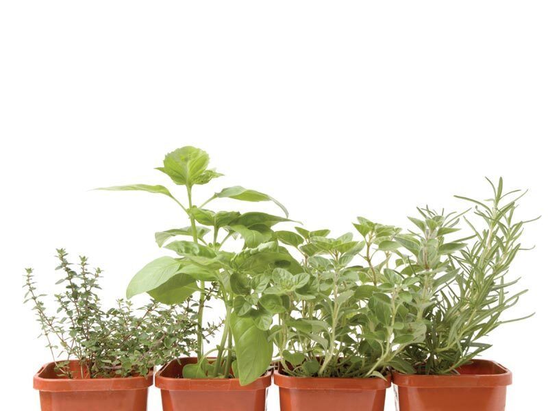 growing-herbs-inside-01-2844463