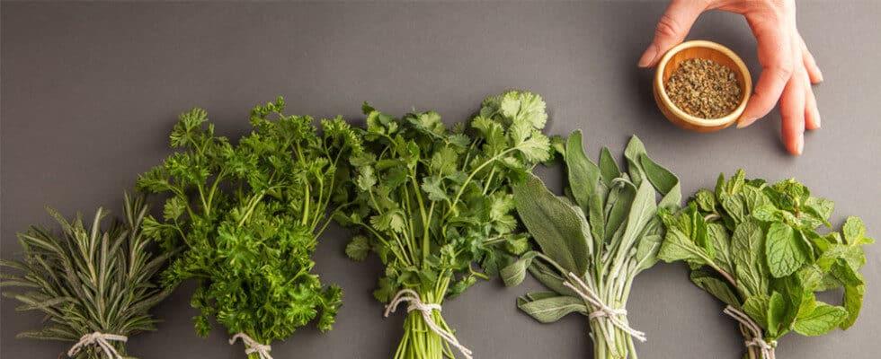 fresh-herbs-h-980x400-5730836