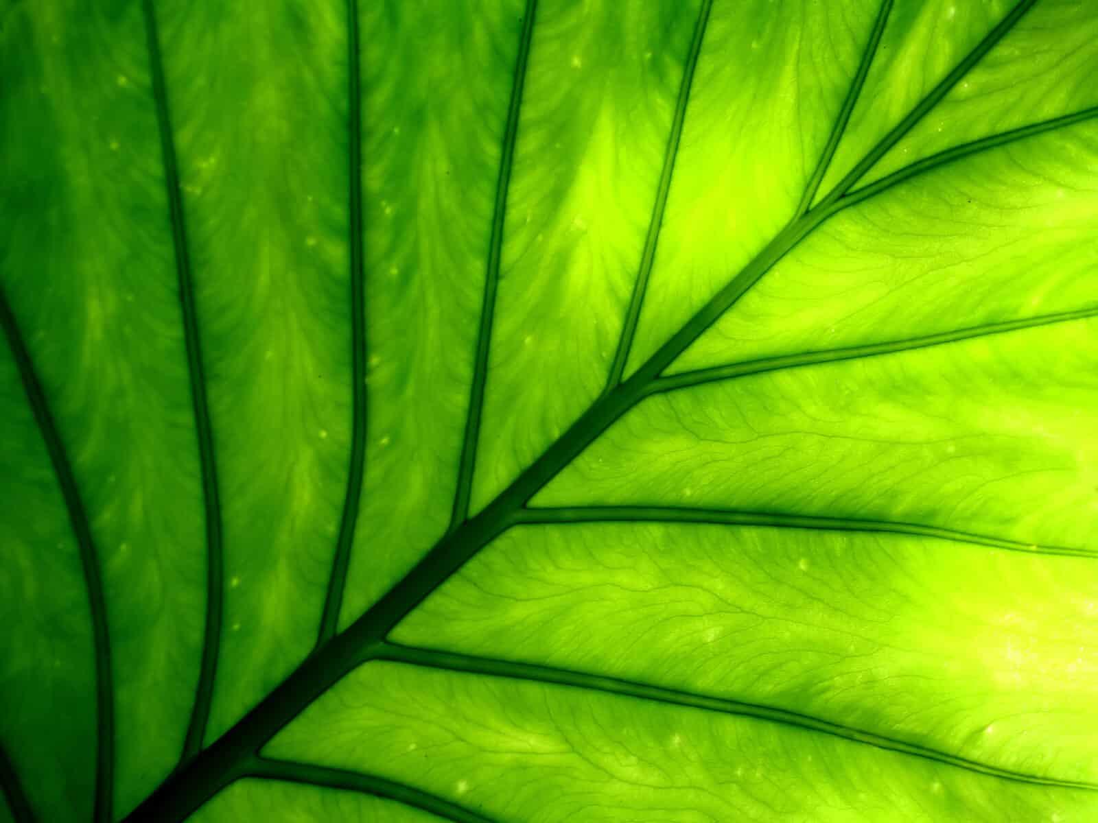 chlorophyll-1-1600x1200-3538438