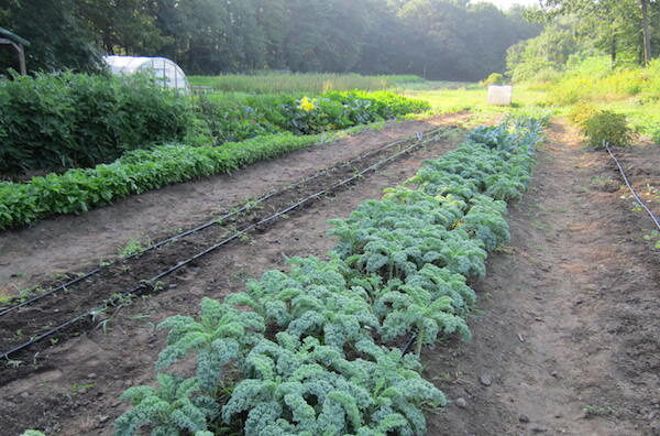 fields-view-kale-and-more-4506733
