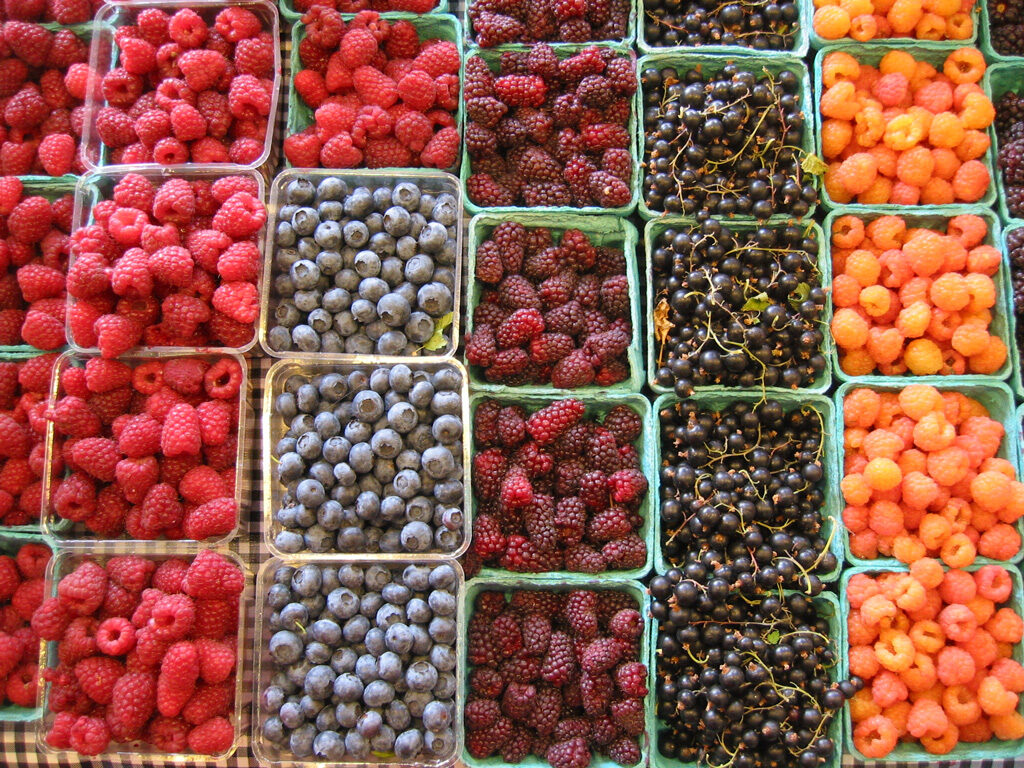 berries-01-6695375