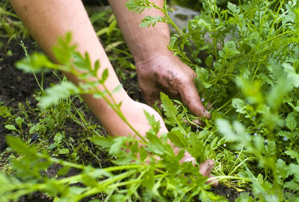 hands-with-weeds-in-soil-7269231