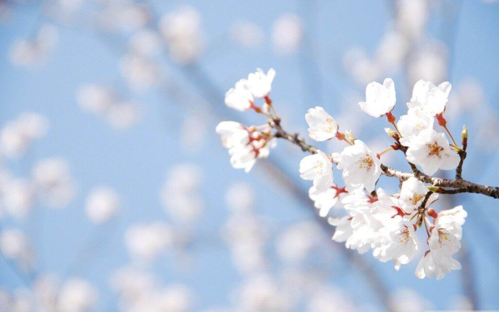 spring-wallpaper-free-desktop-1024x640-4374251