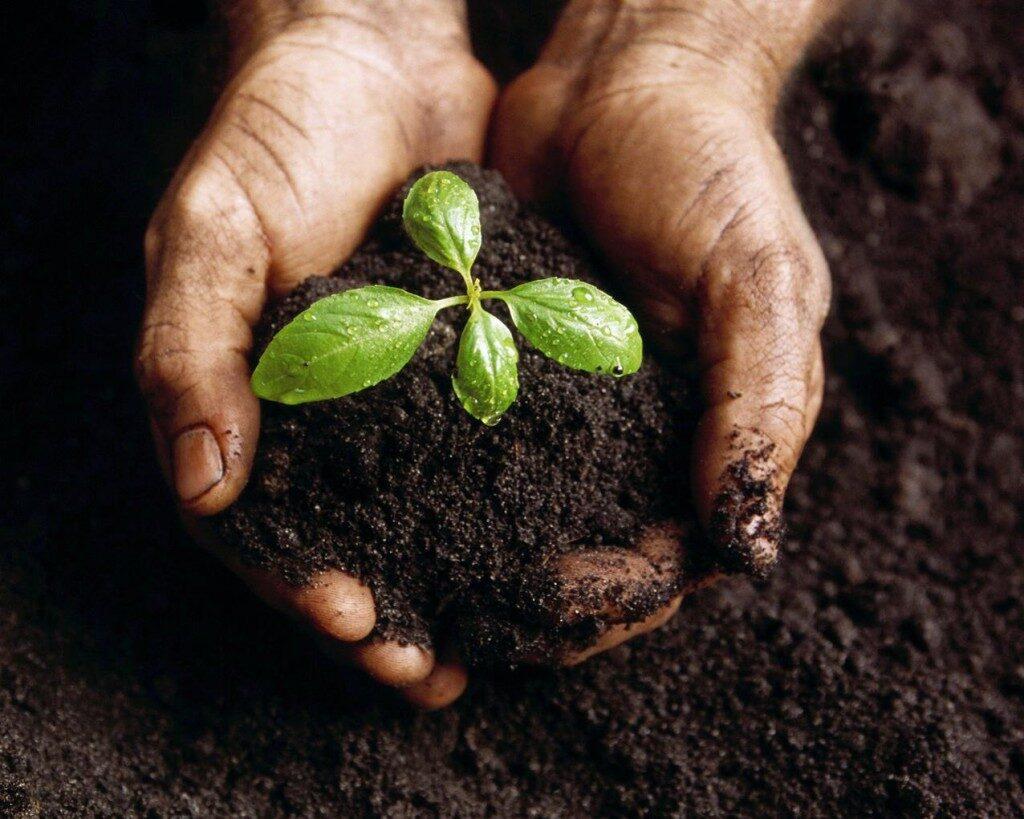planting-plant-1024x819-4601256