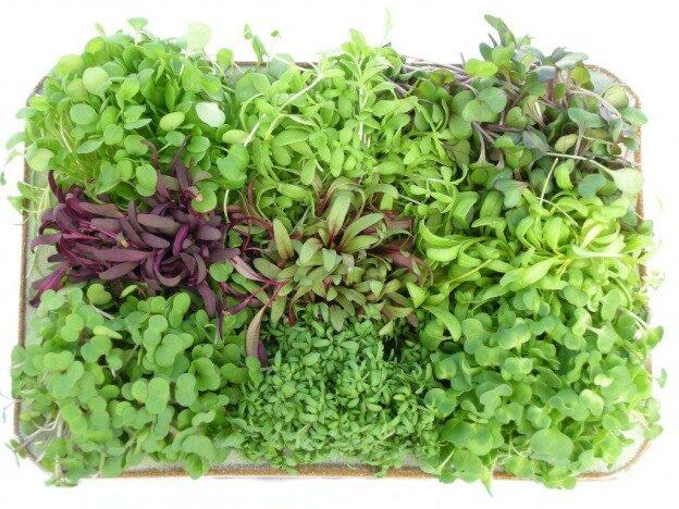 micro-greens-health-benefits-e1404326270769-3504446