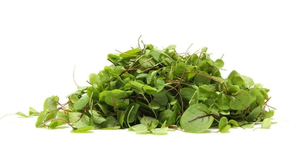o-lettuce-facebook-1024x512-6189929