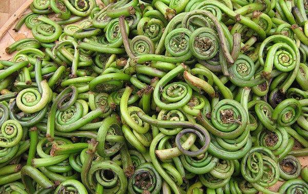fiddlehead-ferns-2328370