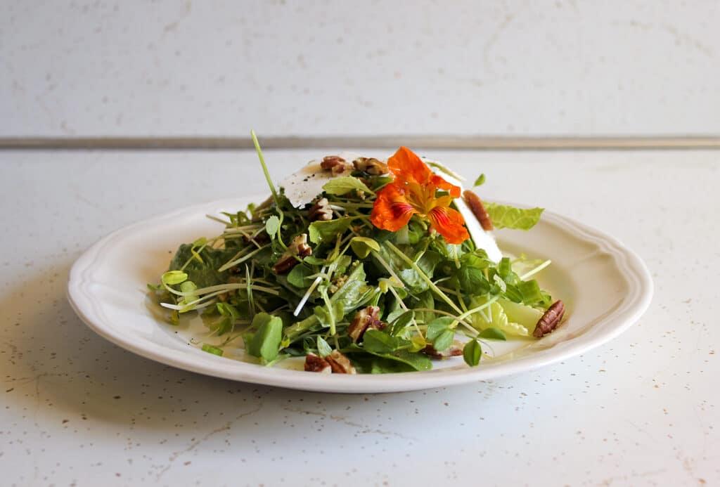 microgreens-salad-1583250