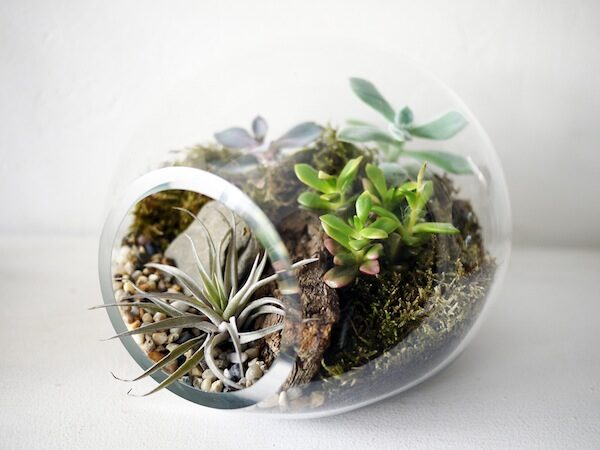 bubble-terrarium-1229712