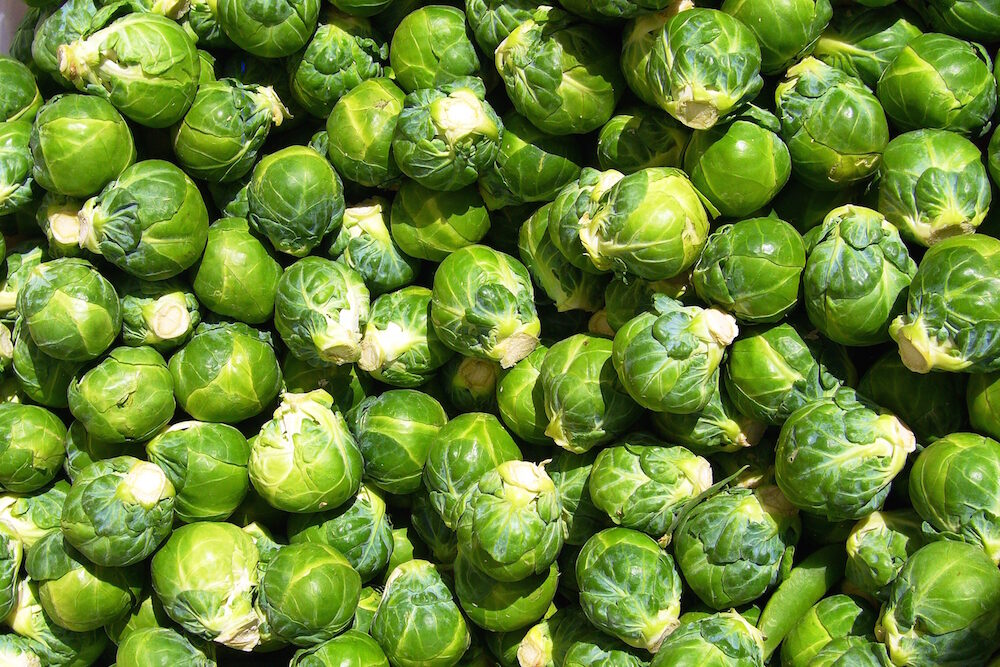 brussels_sprout_closeup-7896411