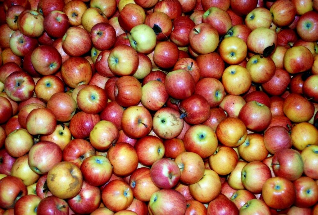 apples-for-fat-loss-diet-routine-1024x693-3610419