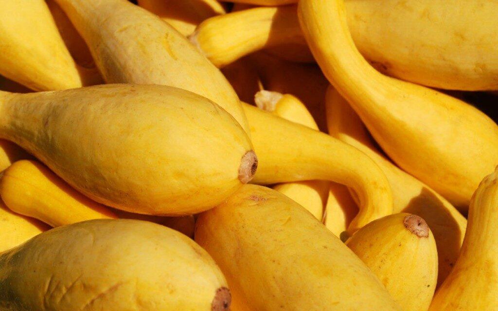 yellow-squash-ftr-1024x640-9151727