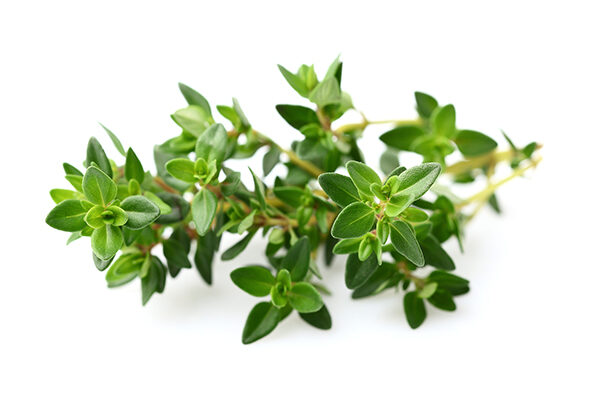 thyme_leaves_e8b13e86-c948-46c3-bfd1-c3d4a1ee1970-7536541