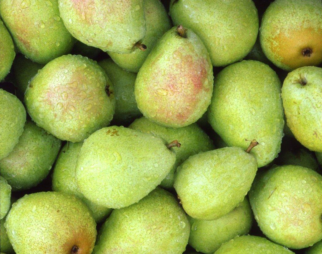 pears2-1024x807-7036050