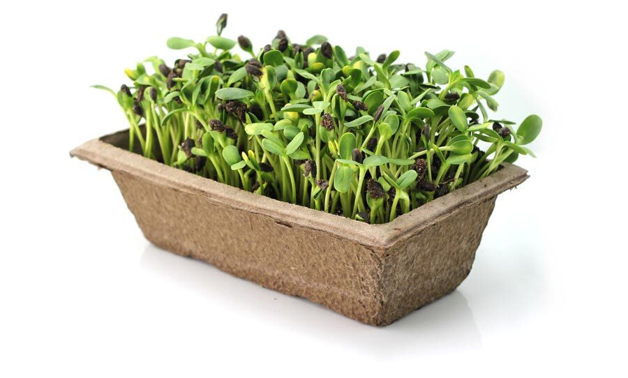 urban-cultivator-flat-of-greens-5710566