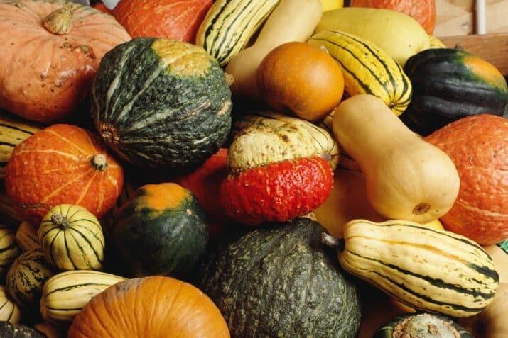 pumpkins-squash-and-gourds-in-abundance