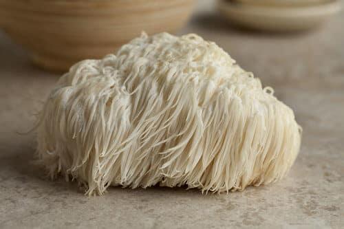 50030752-single-lions-mane-mushroom