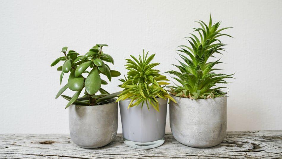 indoor-plants-9103642