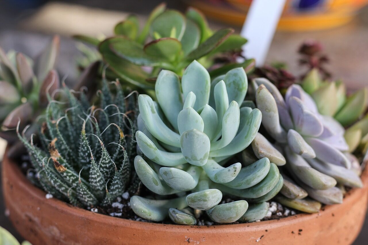 succulent-care-and-display-tips-7197882