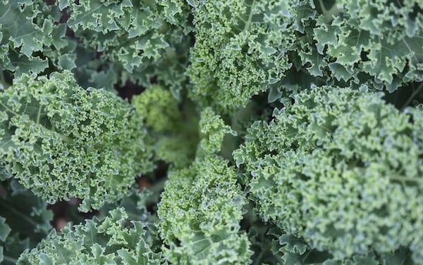 salad-texture-green-kale-9157336
